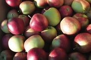 applesnewsletter